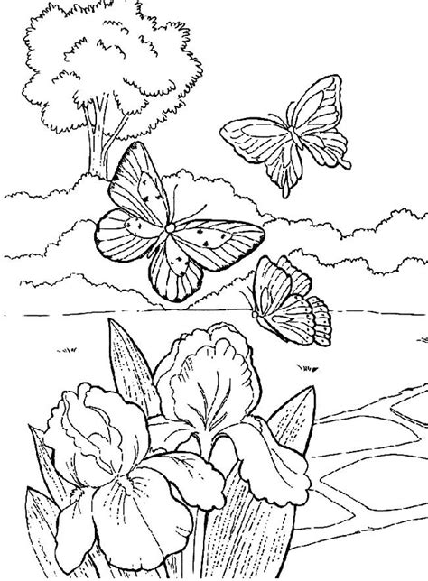 beautiful butterfly   garden coloring pages spring