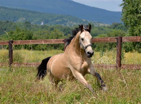 Die 5 schönsten Pferderassen
