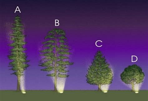 low voltage uplighting of trees read more http www