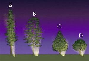 Low voltage uplighting of trees read more http