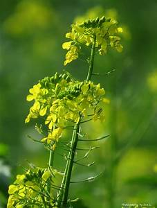 Wann Wein Pflanzen : gladiolen pflanzen zeit gladiolen pflanzen wann ist die beste pflanzzeit gladiolen pflanzen in ~ Orissabook.com Haus und Dekorationen