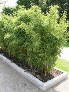 Wie Schnell Wächst Bambus : bambus das faszinierende riesengras mein sch ner garten ~ Frokenaadalensverden.com Haus und Dekorationen