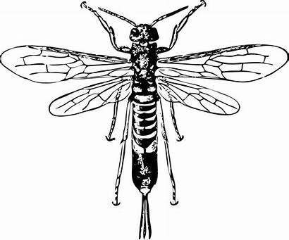 Wasp Tail Clip Horn Clipart Bee Drawing