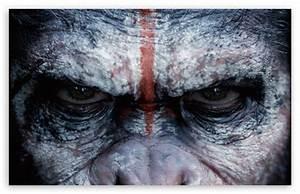 Dawn of the Planet of the Apes Caesar 4K HD Desktop ...