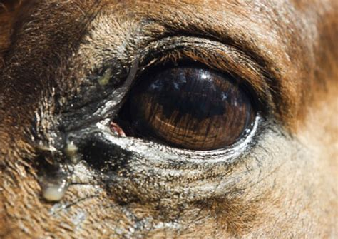 eye horse horses equine aid equisearch care riding anatomy