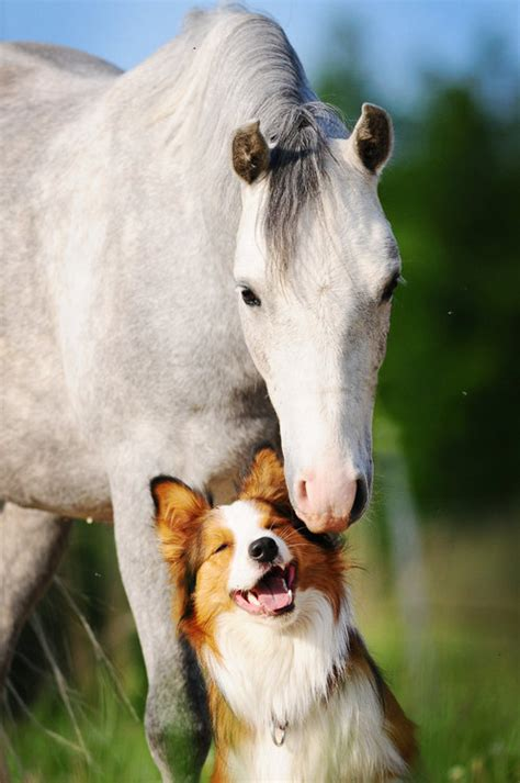 horses dog dogs horse adorable friends special friendship say friend between these