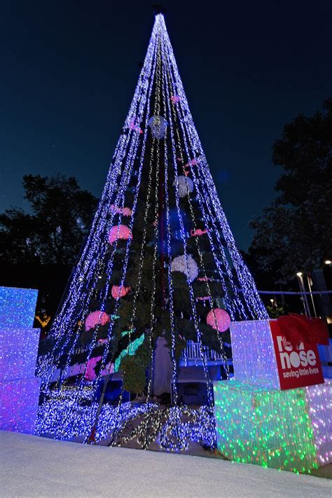 red nose unveils canberra s christmas tree red nose