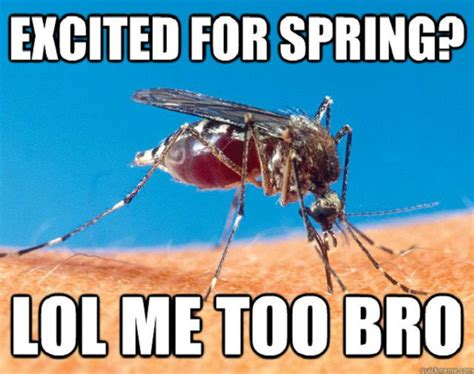 16 Funny Memes About Spring