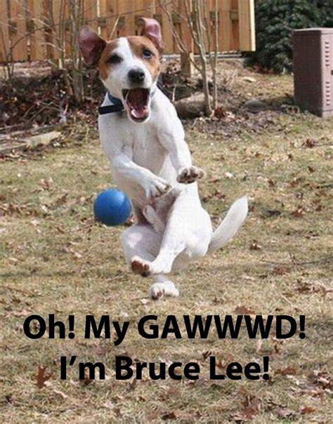 Pet Meme - 10 funny pet memes some pets v follow gwylio0148 or visit http gwyl io for more diy kids