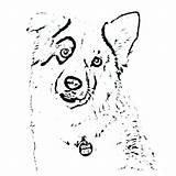 Shepherd Coloring Australian Dog Cattle Getdrawings Printable Getcolorings Toy Colorings sketch template
