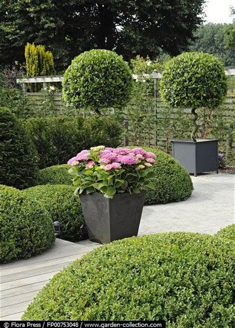 modern country style hydrangeas topiary and boxwood in