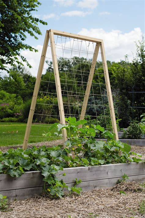 Buy Trellis by This Vegetable Trellis Is Great For An Assortment Of
