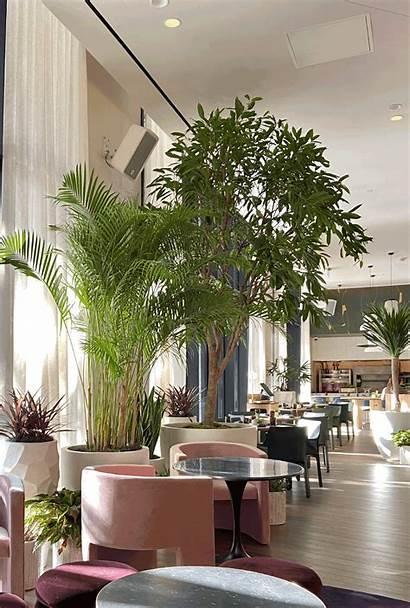 Hotel Virgin Dallas Indoor Plants Plant Wall