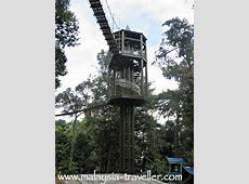 KL Forest Eco Park Bukit Nanas Forest Reserve