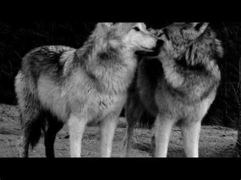 canaper noir et blanc loups noir et blanc