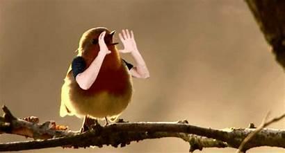 Birds Arms Gifs Had