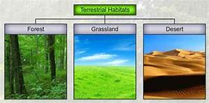 What Are The Different Types Of Habitat  Give Diagrams The