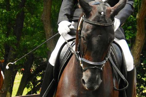 Chiropraktiker Pferd Ausbildung
