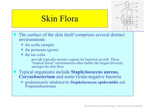 normal flora   skin pictures