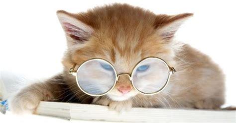 funny cats wearing cooling glass pics funny pics box
