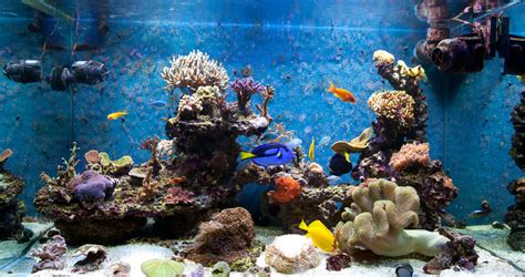 comment cr 233 er un aquarium biotope