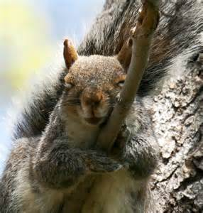 Funny Sleeping Squirrel