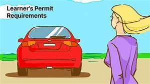 Driver U0026 39 S Permit  Learner U0026 39 S Permit  Requirements  The 2020