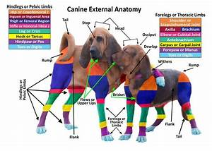 49 Best General  U0026 Introductory Veterinary Medicine Images