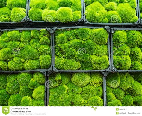 moss in vegetable garden moss plant garden by the bay singapore stock image