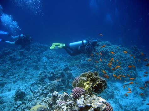 kona kailua bay hawaii diving scuba