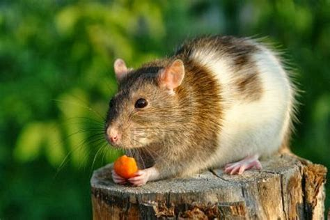 Funny Cute Mouse  Information & Latest Pictures Funny