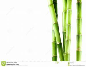 Bamboo On White Isolated Background Royalty Free Stock ...