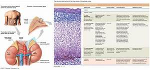 Quotes About Adrenal Glands  39 Quotes