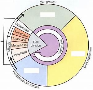 Eukaryotic Cell Cycle And Mitosis
