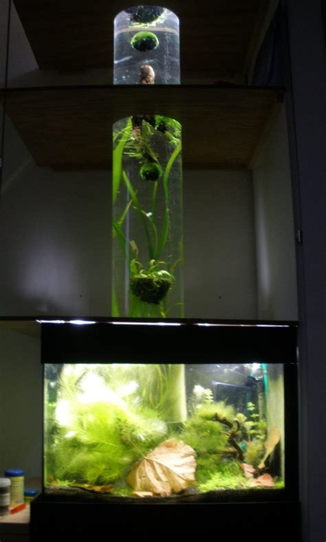 Keini's Planted Tanks Photo (ID 33538) - Full Version