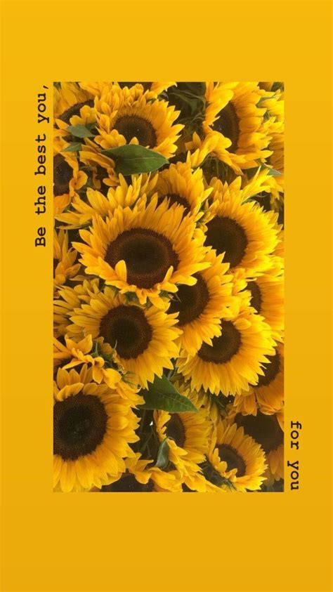 sunflower aesthetic wallpapers wallpaper cave