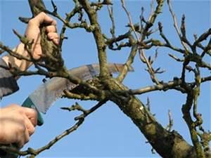 Taille De Cerisier : taille de restauration d 39 un arbre fruitier ~ Melissatoandfro.com Idées de Décoration