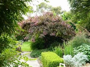 Die Schönsten Gartenbäume : ornamental trees gardening pinterest pflanzen ~ Michelbontemps.com Haus und Dekorationen