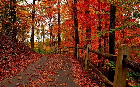 Aesthetic Fall Themed Desktop Backgrounds by Autumn Screensavers Wallpaper 57 Images