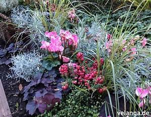 Balkonbepflanzung Im Herbst : balkon herbst winterbepflanzung raum und m beldesign inspiration ~ Markanthonyermac.com Haus und Dekorationen