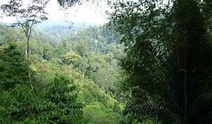 Fostering stakeholder dialogues to catalyse forest ...