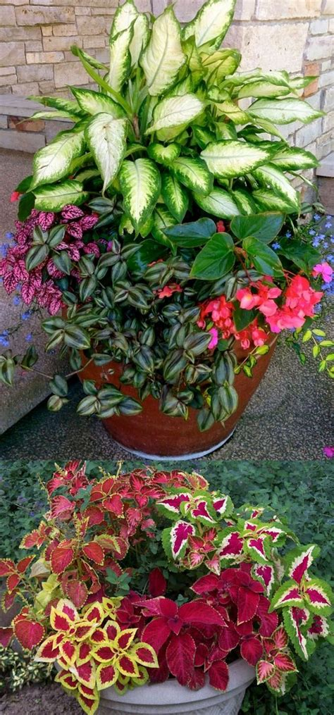 25 best ideas about shade plants on shade