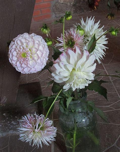 Krāsaini cerību stari rudens ziedu parādē | Bebrene ...