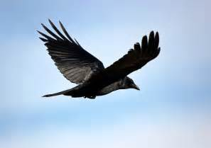 Birds Flying Photography