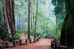 Big Basin Redwoods State Park - a photo on Flickriver