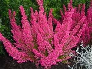 Winterpflanzen Für Balkonkästen : winterpflanzen pflanzen f r nassen boden ~ Indierocktalk.com Haus und Dekorationen