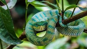 10 Incredible Creatures Of Brunei U0026 39 S Rainforest