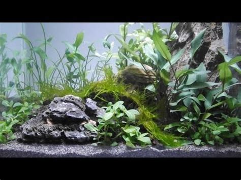 Aquascape Substrate by Aquascape By Owen White 11yrs Using Tropica Plants
