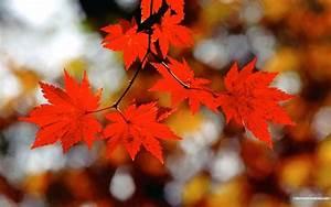 Beautiful, Fall, Wallpapers
