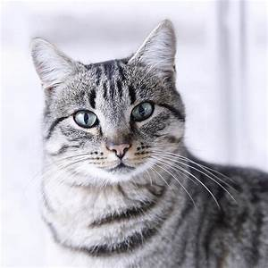 tabby cats (Dec 31 2012 23:59:55) ~ Picture Gallery